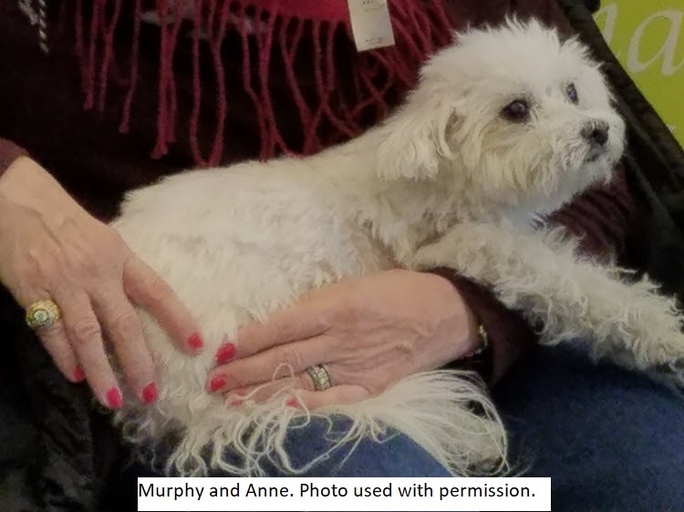 For Persons Living With Dementia, Dog Therapy Is A Gift