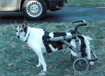 Authors dog in a cart