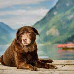 senior dog is companion for elderly