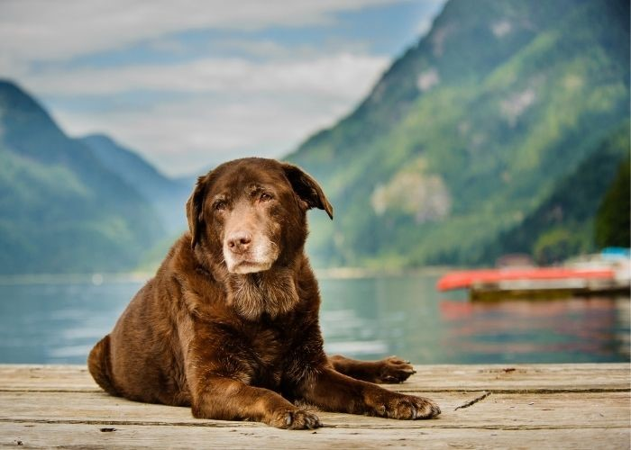 How Seniors Can Benefit From Adopting a Dog